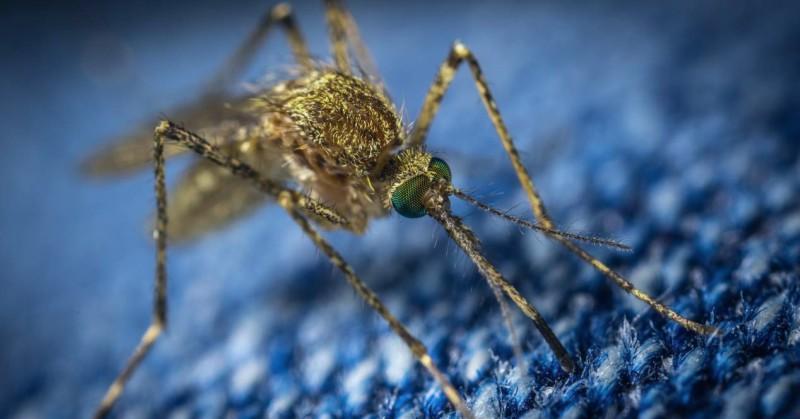Detectan virus del Nilo Occidental en el este de Washington