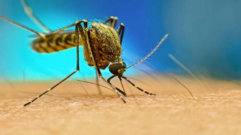 Malaria en África: descubren parásito resistente a la artemisinina