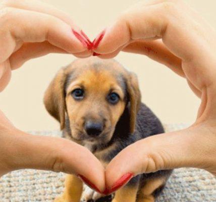 mascotas salud