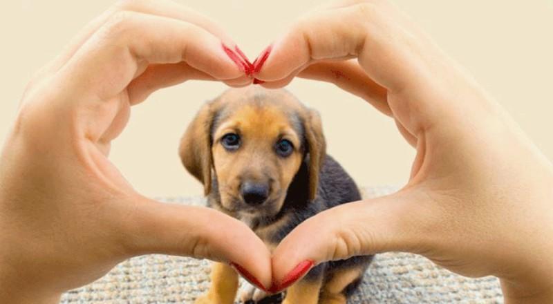 El poder de las mascotas: beneficios para la salud