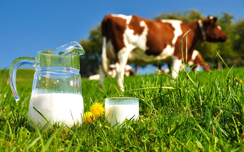 Cincobeneficios de la leche ecológica sin lactosa